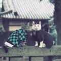 Kimetsu no Yaiba, los fans no podrán resistirse al adorable homenaje